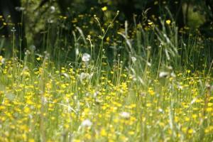 Bei Allergien der Atemwege werden die krankmachenden Allergene mit der Atemluft inhaliert.