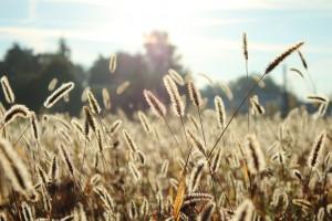 Für Allergiker sind die Blütezeiten von Pollen und Gräser problematisch.