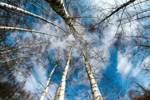 Bei einer Birkenpollenallergie, Haselpollen und Erlenpollen reagiert der Köper meist auf Stein- und Kernobst mit den Symptomen einer Allergie.