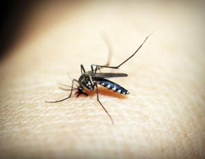 Einer der möglichen Allergietests ist ein Hauttest. Die aufgetragene Allergene auf der Haut verursachen Rötungen und Schwellungen auf der Haut die einem Insektenstich ähneln.