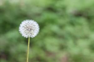 Eine der bekanntesten Allergiearten ist der Heuschnupfen, ausgelöst vom Pollenflug und verschiedenen Gräsern.