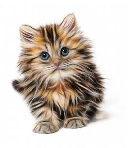 Häufig führen Katzenhaare zu einer Inhalationsallergie.