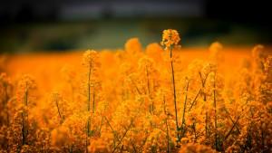 Inhalationsallergien können saisonal wie bei Heuschnupfen abhängig vom Pollenflugkalender auftreten.