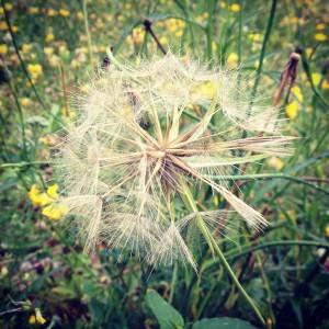 Zu Blütezeiten gilt es Pollen zu meiden