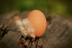 """Bei der Hühnereiweißallergie kann in Folge einer Kreuzallergie auch eine Unverträglichkeit gegen Geflügelfleisch und Federn vorliegen. Das sogenannte """"Bird-Egg-Syndrom""""."""