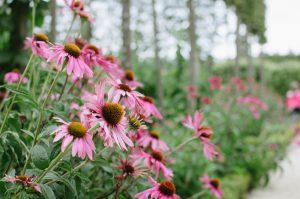 Häufige Allergen im Sommer sind die Pollen von Bäumen und Gräsern.