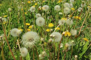 Tipps bei Allergien die effektiv helfen Allergene wie Pollen zu vermeiden.