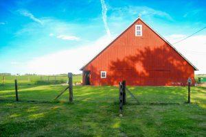 Schutz vor Asthma durch Landleben kann durch den Kontakt mit Tieren erreicht werden.