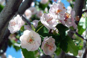 Vorallem im Sommer und Frühling kommt es verstärkt zu Symptomen bei einer Pollenallergie, wenn Pflanzen blühen und grünen.