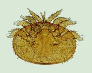 Bei einem allergischen Schnupfen ausgelöst durch Milben kommt es das ganze Jahr über zu Symptomen und nicht nur saisonal wie beim Heuschnupfen.