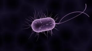 Ist die Darmflora gestört durch falsch angesiedelte Bakterien kann es zu unangehmen Symptomen wie Blähungen, Bauchschmerzen und Durchfällen kommen.