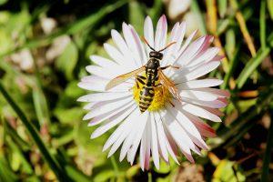 Im Sommer sollten Allergiker Plätze meiden wo sich Wespen und Bienen aufhalten. Auch sollte man sie nicht durch süße Getränke und Speisen anlocken.