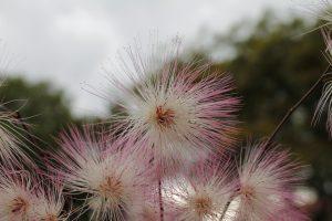 Welche Allergiearten gibt es?