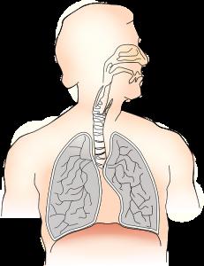 Der mit der Luft eingeatmete Feinstaub schädigt in erster Linie die Lunge.