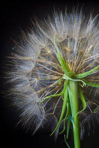 Tritt das Immunsystem mit Allergenen in Kontakt setzen Mastzellen den Botenstoff Histamin frei und es kommt zu entzündlichen Prozesses im Körper.