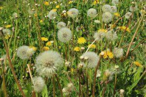 Die Defintions Allergie beschreibt eine Autoimmunerkrankung gegenüber fremden Stoffen der Umwelt.