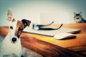 Auch Allergien bei Katzen und Hunden sind möglich.
