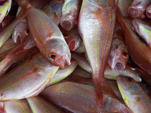 Allergien auf Fisch schlagen meist auf den Magen.