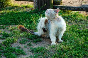 Neben Zecken sind auch Flöhe bei Tieren weit verbreitet und müssen behandelt werden.
