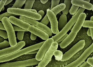 Immunglobulin G wirkt gegen Bakterien und Viren.