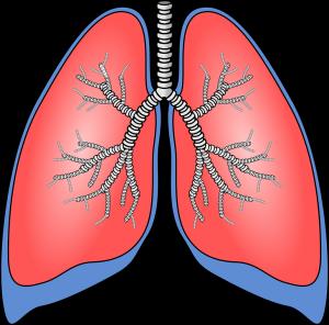 Schwellungen der Bronchialschleimhäute werden durch Glucocorticoide gelindert.