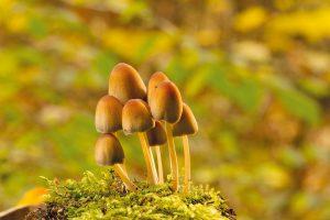 Pilze können die Darmflora und das Immunsystem stärken.