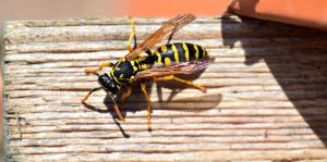 Ein Insektenstich kann beim Allergiker zu heftigen Symptomen führen.