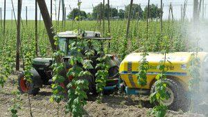 Hopfen wird nicht nur zum Bierbrauen angebaut.