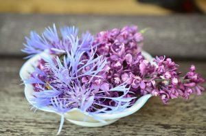 Bei einer Allergie gegen Flieder gilt es die Pollen zu meiden.