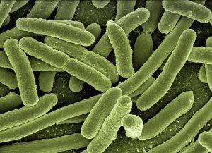 Antikörper bekämpfen unter anderem Bakterien.