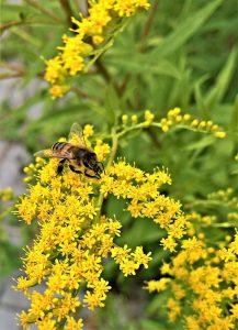 Allergiker sollten den Kontakt mit den Pollen meiden.