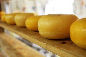 Abhängig von der Käsesorte kann Käse zu einer Käseallergie führen.