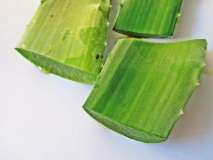 Aus den fleischigen Blättern der Pflanze kann das Aloe-Vera-Gel gewonnen werden.