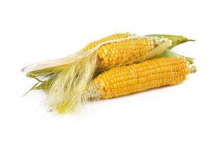 Mais kann roh und gekocht zu Symptomen führen.