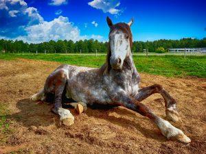 Den Kontakt zu Pferden sollten Allergiker meiden.