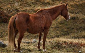 Pferde können eine Pferdeallergie auslösen.