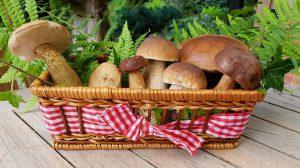 Eine Pilzallergie kann unter anderem durch für den Menschen bekömmliche Waldpilze ausgelöst werden.