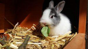 Bei einer Kaninchen-Allergie sollte man den Kontakt zu Kaninchen meiden.