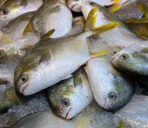 Fisch gehört zu den Lebensmitteln die gegen eine Entzündung im Körper helfen.