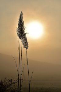 Medikamente bei einer Sonnenallergie, Tabletten und Salben können die Beschwerden lindern.