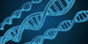 Die Genetik kann die Entstehung von Allergien begünstigen.