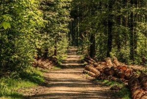 Frische Waldluft wirkt entspannend und man kann mit allen Sinnen genießen.