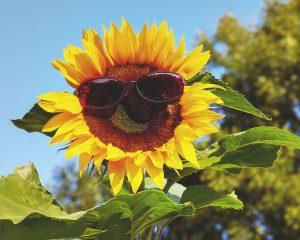 Zuviel Sonne kann zu Hautkrebs führen.