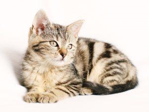 Mögliche Allergien bei Katzen und ihre Ursachen.