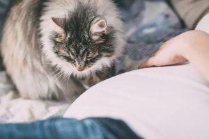 Häufig führt eine übertriebene Hygiene zur Entstehung von Allergien, Kinder sollten daher möglichst auch mit Tieren aufwachsen.