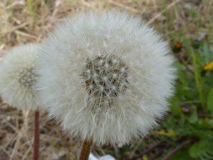 Allergiker sollten nach Möglichkeit die Allergene meiden wie verschiedene Pollen etc.