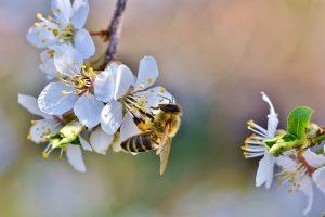 Pollen können zu Allergien führen.