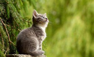 Katzen führen häufig zu Allergien.