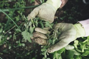 Handschuhe können vor dem Hautkontakt mit Allergenen schützen.