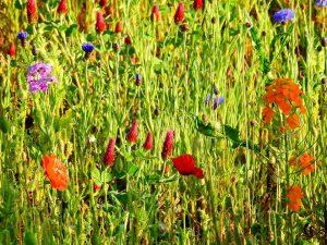Allergien können durch verschiedene Stoffe ausgelöst werden wie Pollen oder Gläser etc.